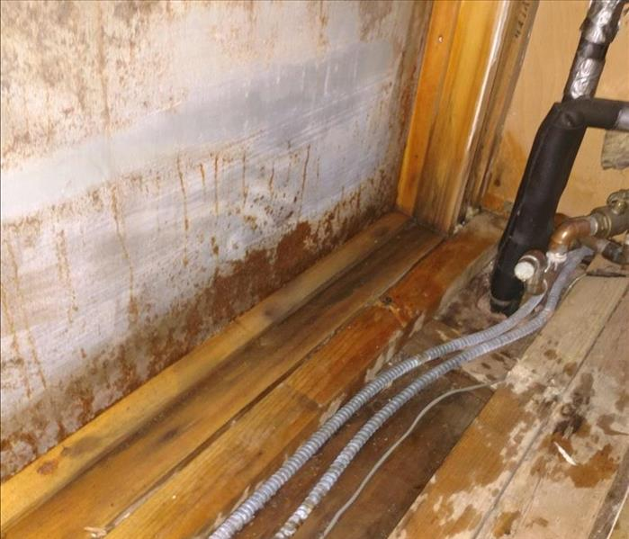 Mold Remediation in Scotch Plains, NJ After
