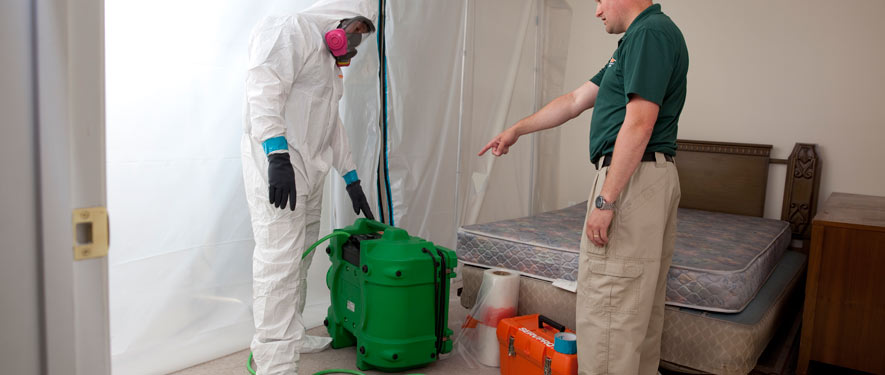 New Providence, NJ mold removal process